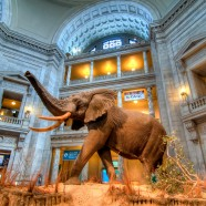 Photo: Smithsonian Museum of Natural History