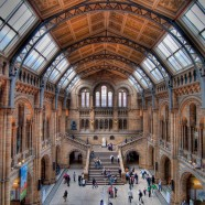 Photo: London Museum of Natural History