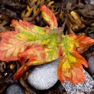 Photo: Fall Leaf on the Beach