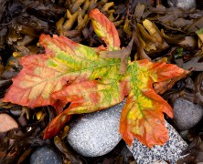 Photo: Fall Leaf on the Beach