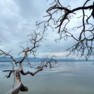 Photo: Arbutus Tree
