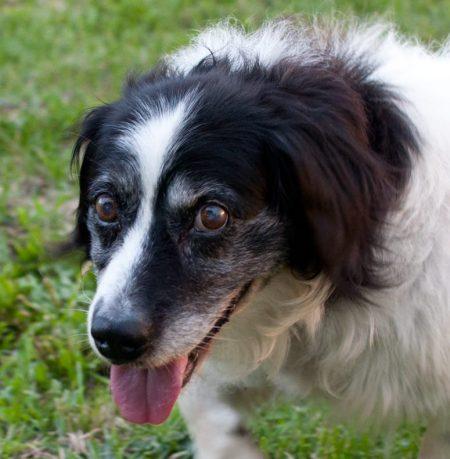 Shelter Dogs Sept 27 2011