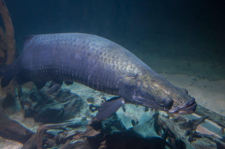 Fish aquarium vancouver -