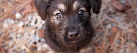 Puppies & Bunnies