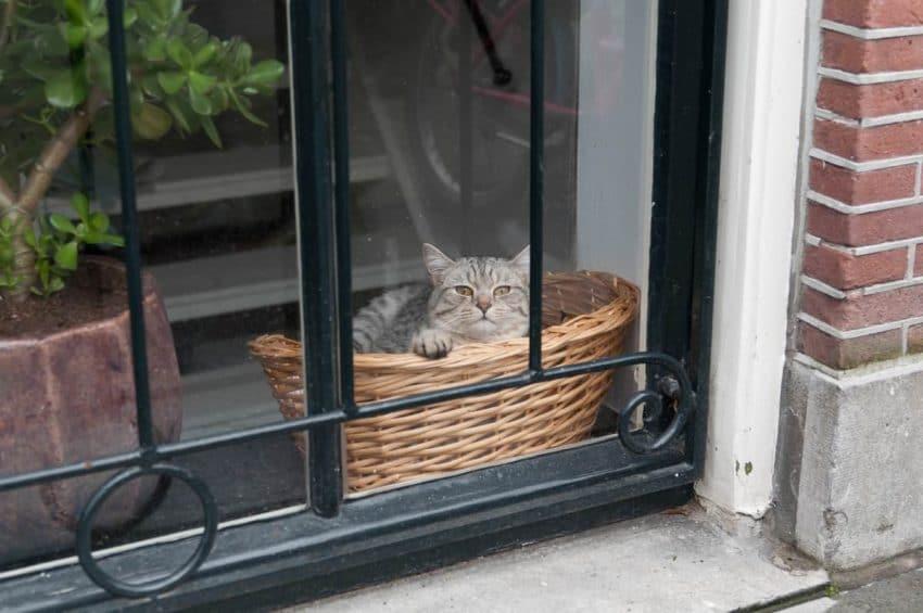 Amsterdam Dec 2011 dutch cat