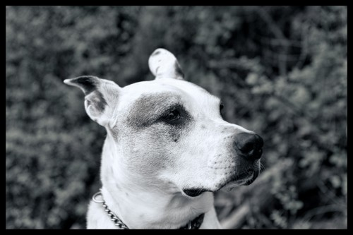 First photo taken with my Nikon D800, my dog Cedric