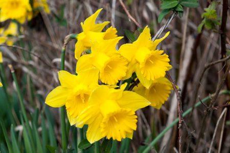 George C. Reifel Migratory Bird Sanctuary: flowers