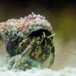 Vancouver Aquarium - 2012-05-01