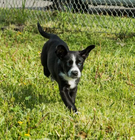 Shelter Dogs 2012-05-05 Vancouver Animal Control