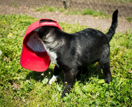 Vancouver Animal Control - Shelter Dogs - 2012-05-11 - Puppies