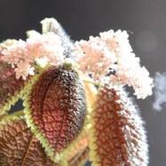 Poppin' Pollen