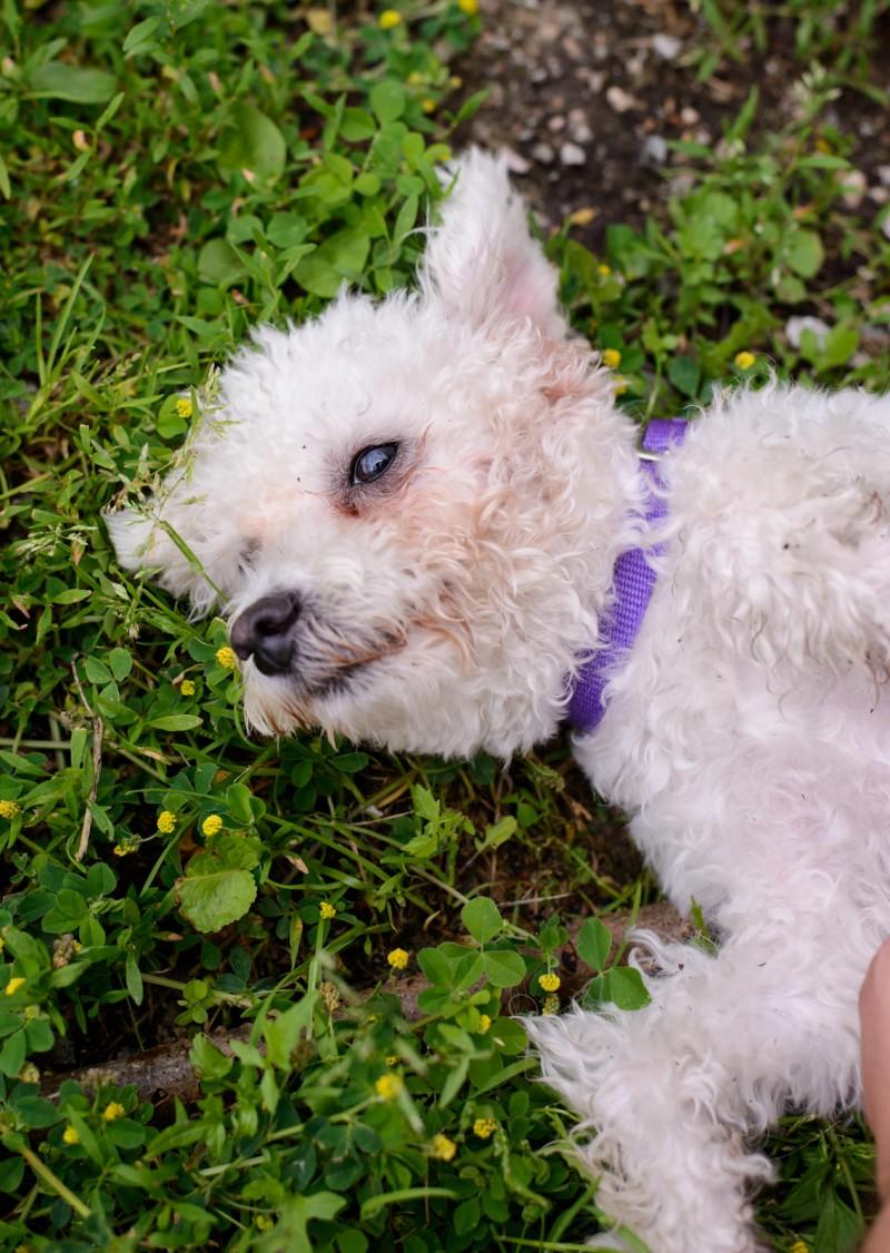 Shelter Dogs : 2012-06-23 : Fluffy 1