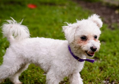 Shelter Dogs : 2012-06-23 : Fluffy 2
