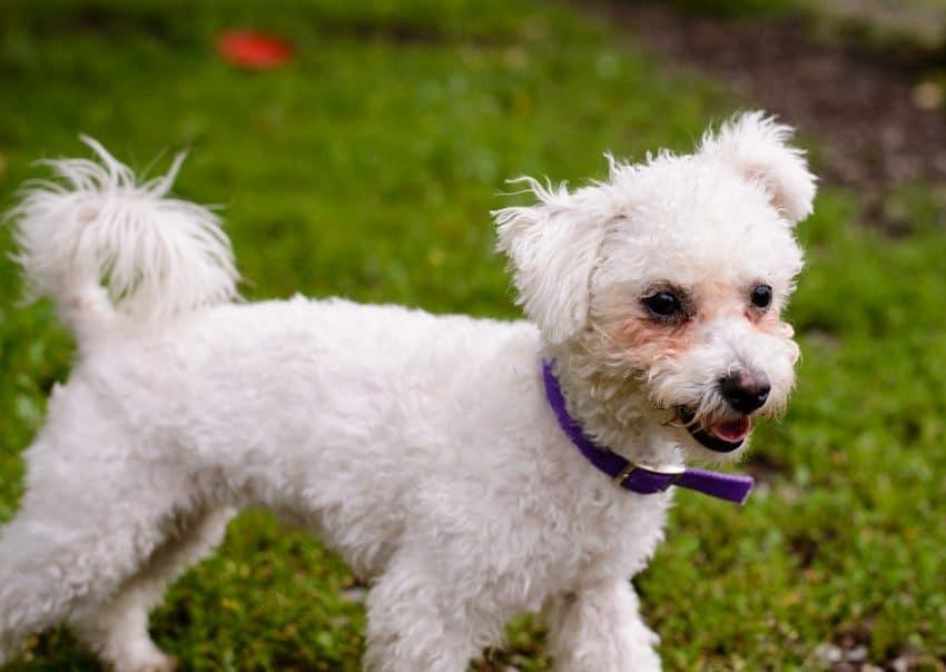 Shelter Dogs : 2012-06-23 : Fluffy 2