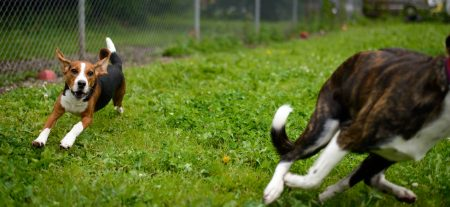 Shelter Dogs : 2012-06-23 : Chase 1