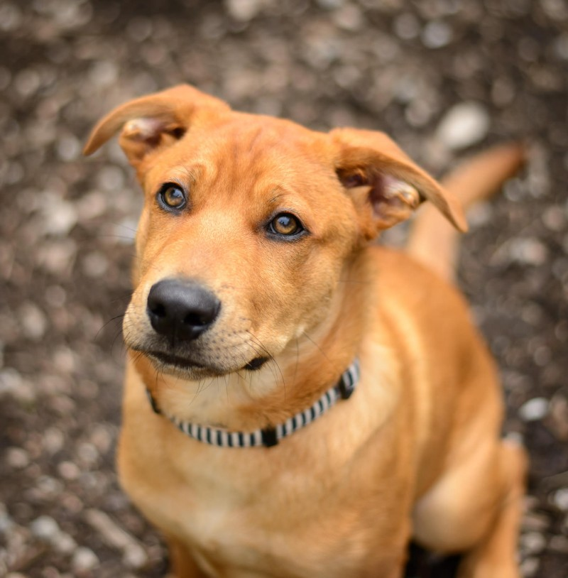 Shelter Dogs : 2012-06-23 : Puppy 1
