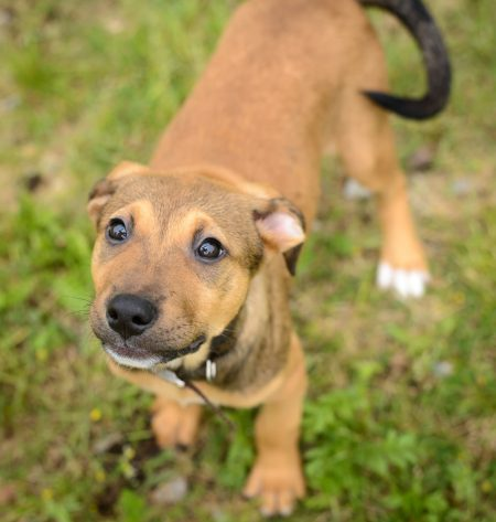 Shelter Dogs : 2012-06-23 : Puppy 2
