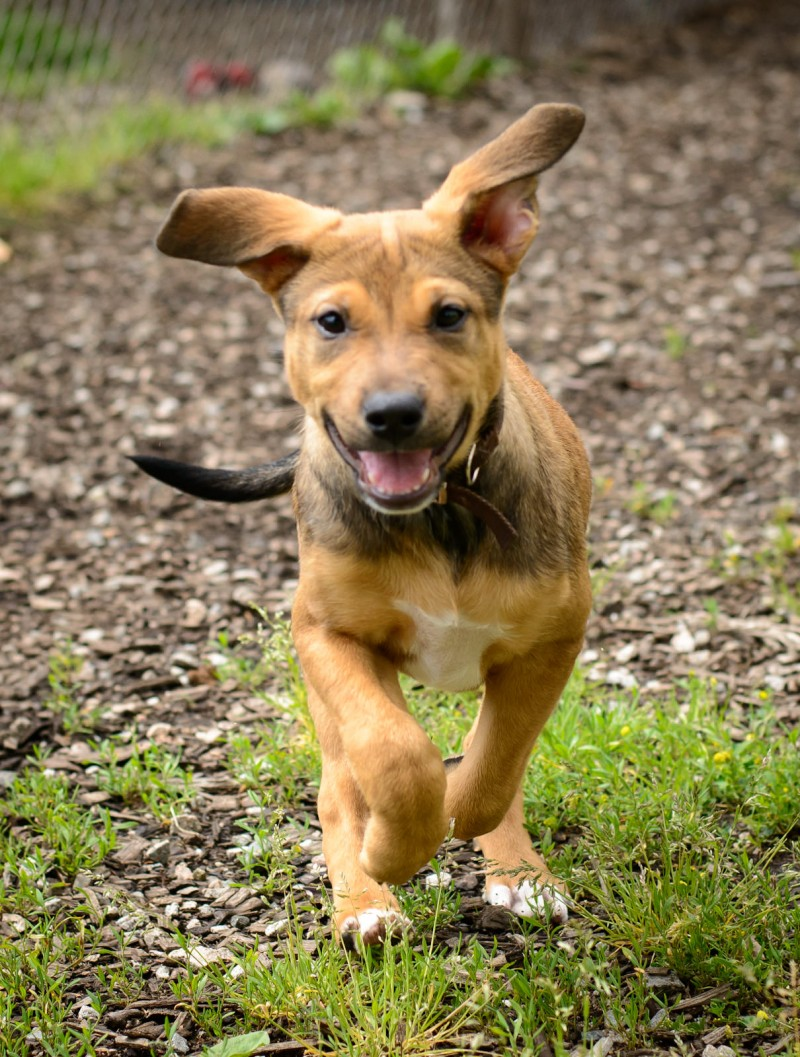Shelter Dogs : 2012-06-23 : Puppy Run