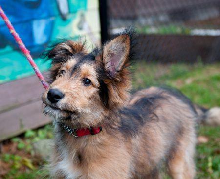Wordpress Jetpack Carousel: Shelter Dogs