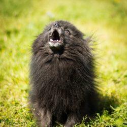 Wordpress Jetpack Carousel Test: Shelter Dogs 2012