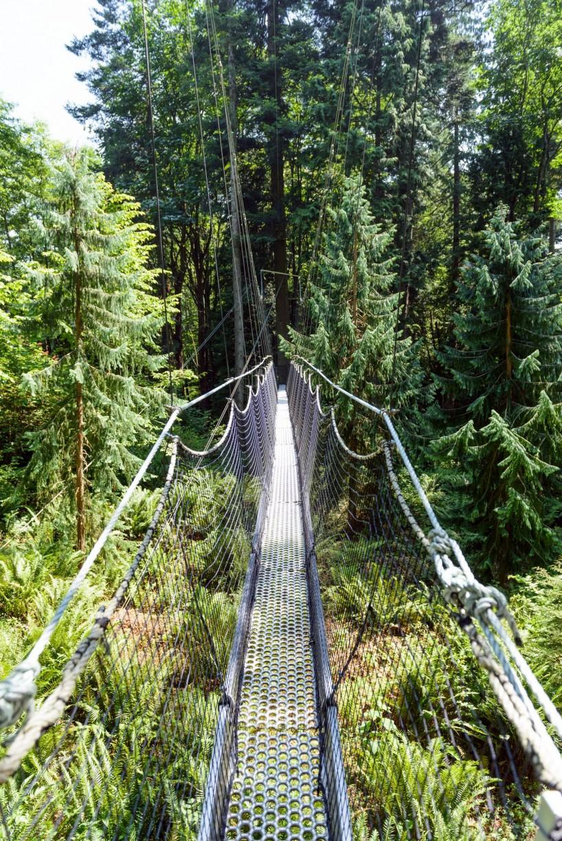 UBC Botanical Garden 1