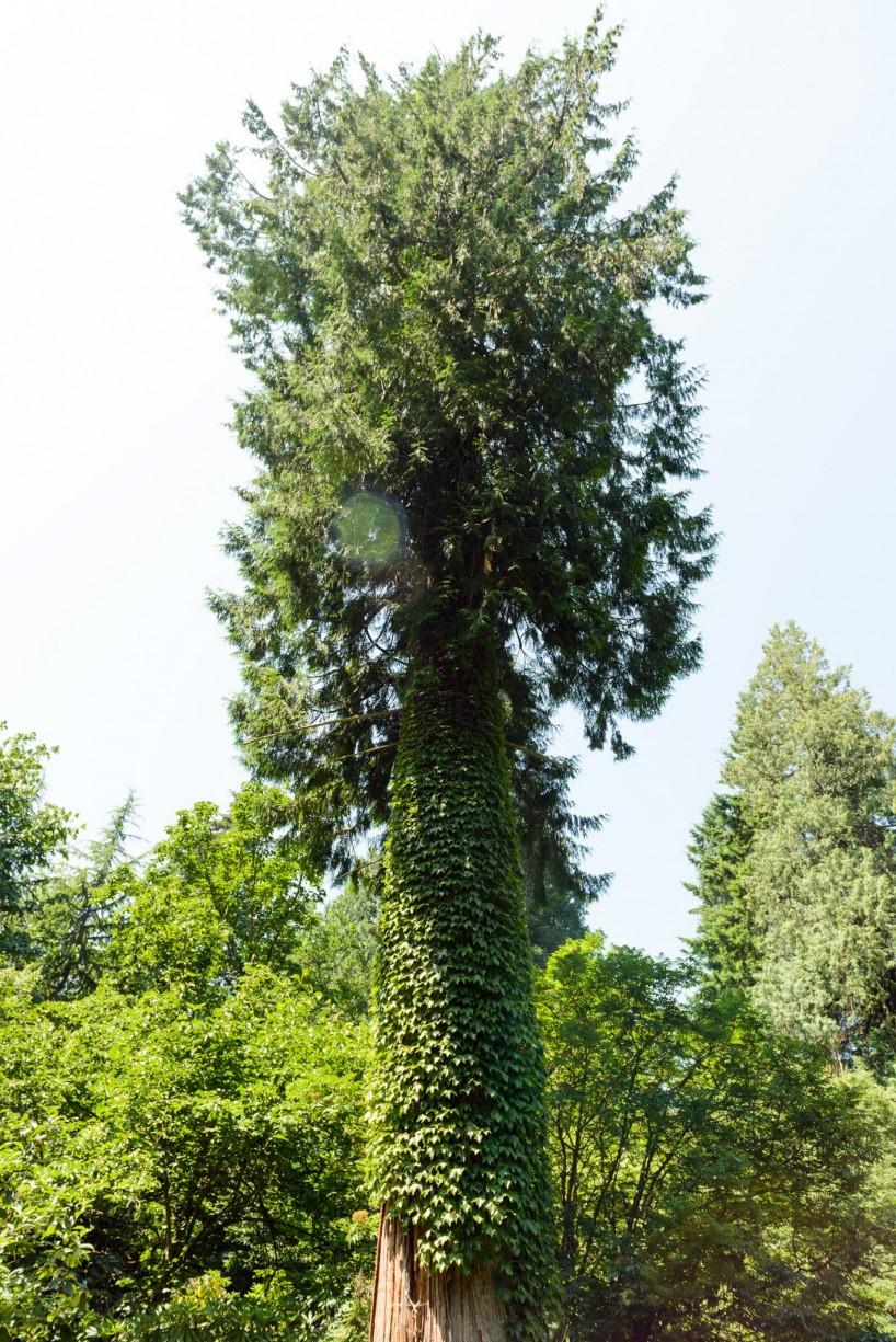 UBC Botanical Garden Vine