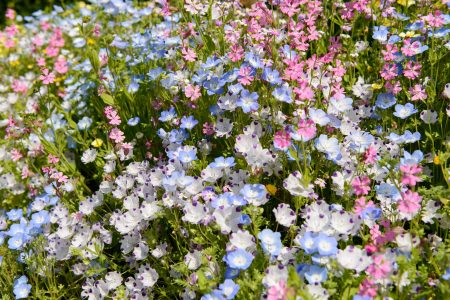 UBC Botanical Garden Flower Mosaic