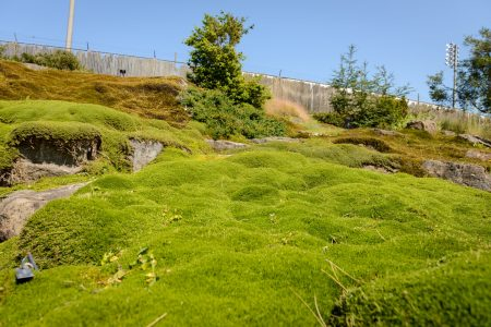 UBC Botanical Garden Carpet