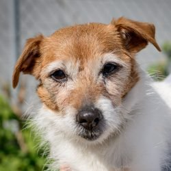Vancouver Shelter Dogs : 2012-07-14: Senior 2