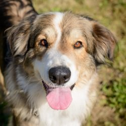 Vancouver Shelter Dogs : 2012-07-14: Fluffy Giant 1