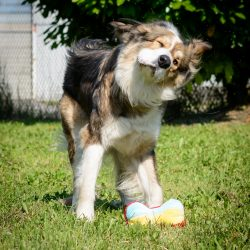 Vancouver Shelter Dogs : 2012-07-14: Fluffy Giant Shake