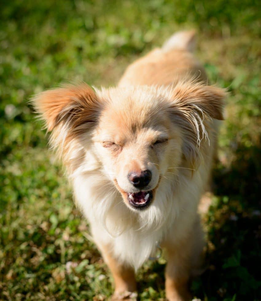 Vancouver Shelter Dogs : 2012-07-14: Mini