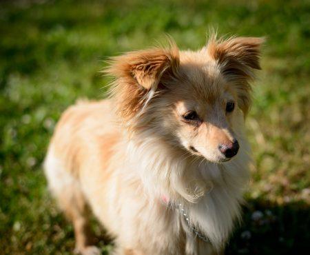 Vancouver Shelter Dogs : 2012-07-14: Mini 2