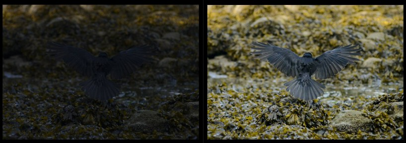 Acadia-Beach : 2012-07-10 : Nikon D800 Shadow Recovery In Lightroom 4