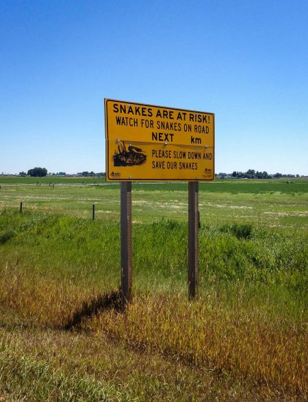 Alberta Visit Aug 2012 - Snakes on the Road