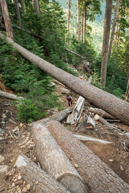 Lions Binkert Trail Hike Vancouver - 2012-08-18 : the slog