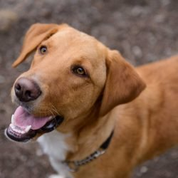 Vancouver Animal Control - Dogs For Adoption : August 30 2012