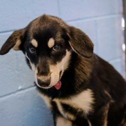 Vancouver Animal Control - Dogs For Adoption : August 30 2012 : Sad Puppy
