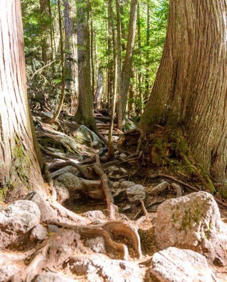 Stawamus Chief - South Peak - Squamish BC - 2012-09-13 : Trail