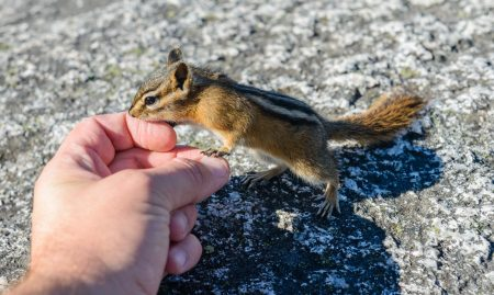 Stawamus Chief - 2012-09-13 - Chipmunk