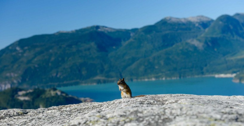Stawamus Chief - South Peak - Squamish BC - 2012-09-13 : Chipmunk buddy