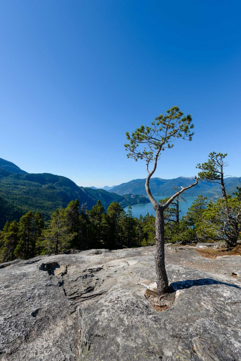 Stawamus Chief - South Peak - Squamish BC - 2012-09-13 : Tree