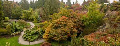Fall Colours in Vancouver's Queen Elizabeth Park