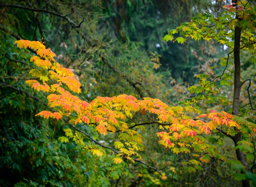Queen Elizabeth Park, Vancouver, BC : 2012-10-11 : Fall Colours