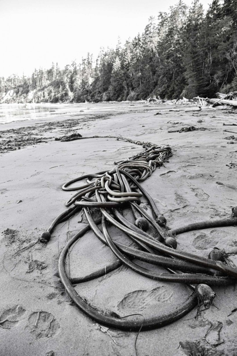Ucluelet BC Vacation : 2012-10 : Bull Kelp Black and White
