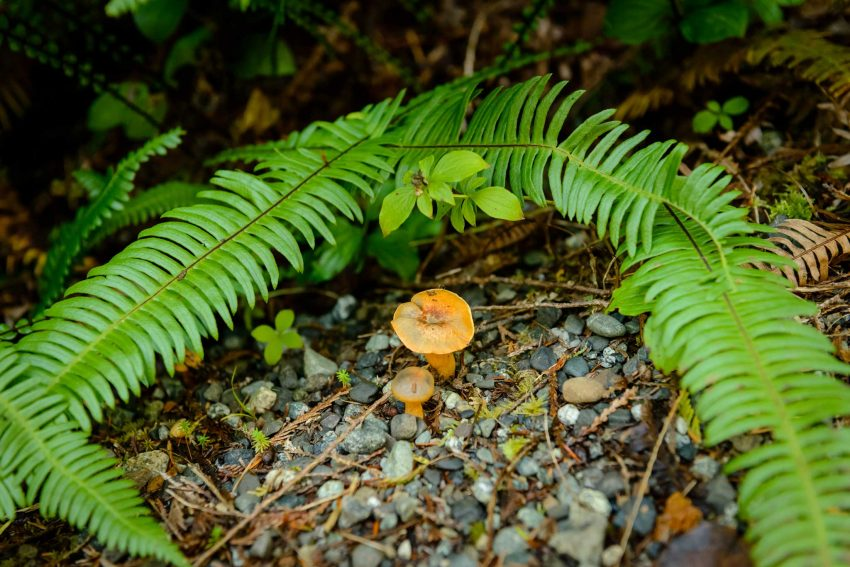 Ucluelet BC Vacation : 2012-10 : Mushrooms 5