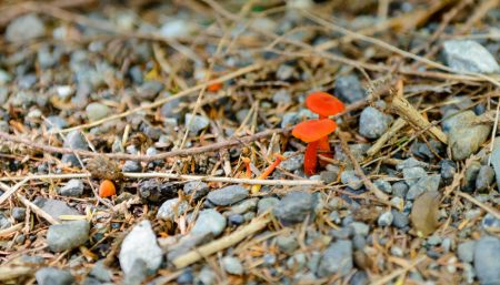 Ucluelet BC Vacation : 2012-10 : Mushrooms 7