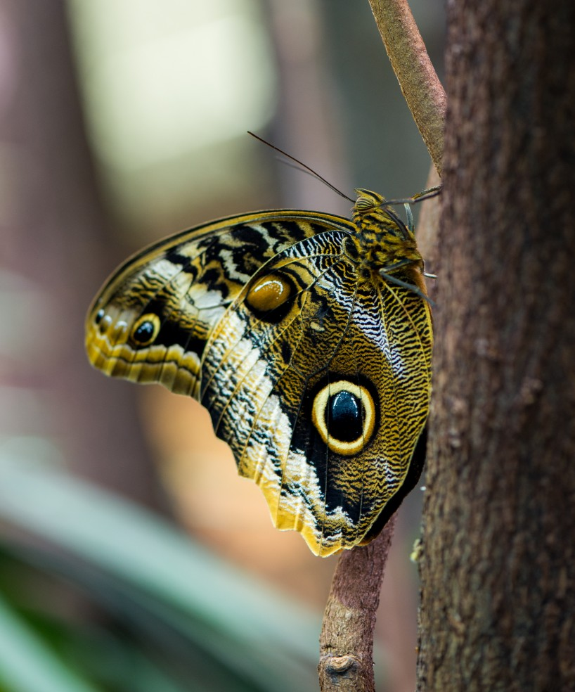 Vancouver Aquarium - macro photo of moth