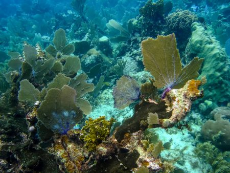 Belize Vacation : Coco Plum Island Resort : Coral Reef