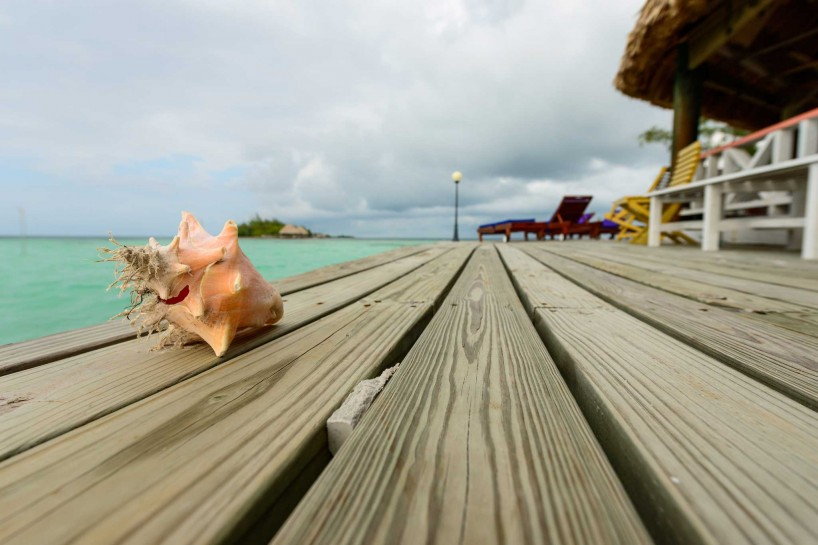 2012-12-01 : Belize Vacation : Coco Plum Island Resort : Conch Shell
